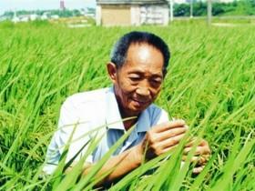 杂交水稻也能留种了,怎么做到的?