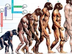 进化论迷思:一切都是适应的结果?