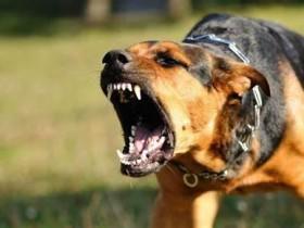 为什么狂犬病一旦发病就没治了?