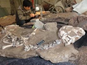 恐龙陷入致命泥潭,经过千万年变成化石