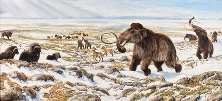 猛犸象、剑齿虎的灭绝造成了什么后果?