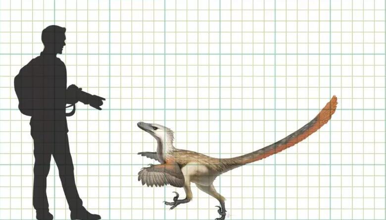 古生物学家在中国发现了真正的迅猛龙