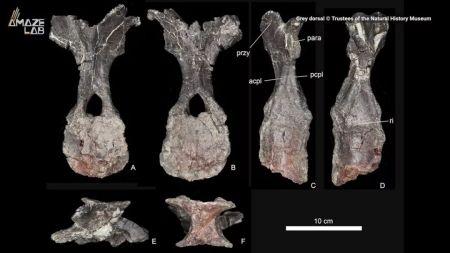 2019年十大古生物化石发现