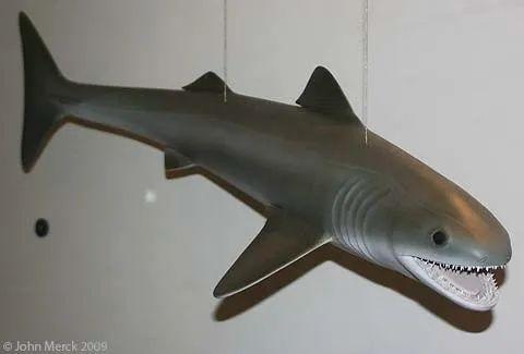裂口鲨:4亿年前的鲨鱼家族老祖宗