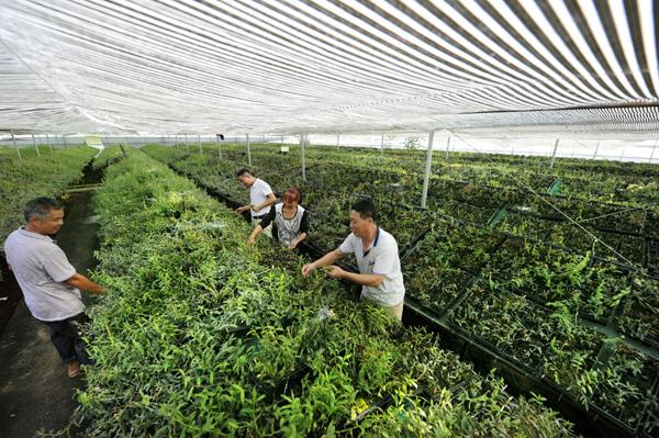 超过6000万亩!中药材种植爆发式增长或威胁粮食安全