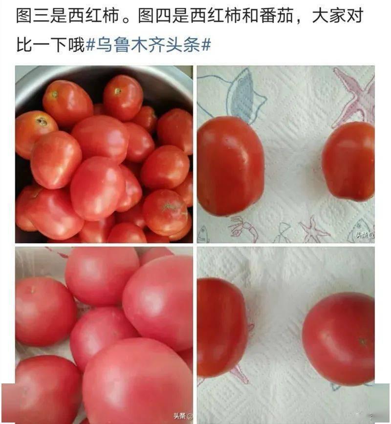 番茄和西红柿到底是不是一种东西?